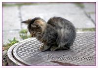 16 августа – День бездомных животных