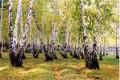 19 сентября – День леса