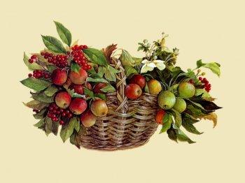 Журнал «Сам»:  советы дачникам и садоводам
